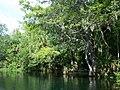 Ocala Silver River06.jpg