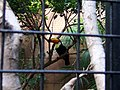 Ocean Park toucan.jpg