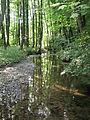 Oetternbach NSG.jpg