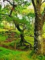 Old Oak - panoramio (2).jpg