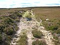 Old track on Pikeston Fell - geograph.org.uk - 510902.jpg