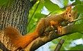 On a branch (32811389267).jpg