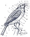 On the natural history and classification of birds (1836) (14755612595).jpg