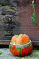 Ornamental Pumpkin (186269797).jpeg