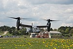 Ospreys in Baumholder 2.jpg