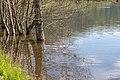 Ossiach Alt-Ossiach Bleistätter Moor Bäume im Wasser 23052019 7031.jpg
