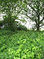 Overgrown railway trackbed - geograph.org.uk - 1319292.jpg
