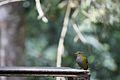 Pássaro procurando por alimento.jpg