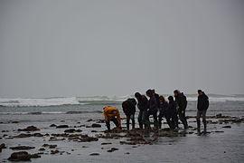Pêche à Pied Oléron 01.JPG