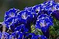 Přílepy, jaro, imgp9972 (2014-04).jpg