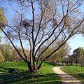 P1340251 Angers parc de Balzac rwk.jpg