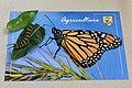 PWLC Monarch Tagging (37349323442).jpg