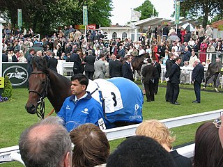 Palace Episode American-bred Thoroughbred racehorse