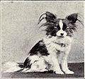 Papillon from 1915.JPG