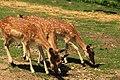 """Parcul de Animale - """"Moara de Vant"""" (7442552574).jpg"""