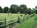 Pasture on Old Billerica Road, Bedford Springs MA.jpg