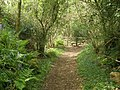 Path, to Didworthy - geograph.org.uk - 1295476.jpg