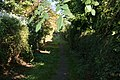 Pathway in the sunshine - geograph.org.uk - 2116306.jpg