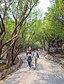 Paved path on Longevity Hill in Summer Palace, Beijing.jpg