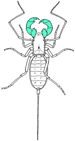 Pedipalp - Image: Pedipalp in green