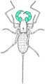 Pedipalp in green.png