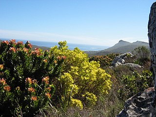 Fynbos shrubland and heathland vegetation of southwestern South Africa
