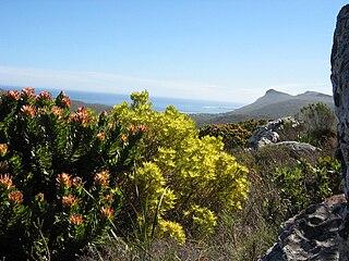 Shrubland and heathland ecoregion of southwestern South Africa