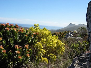 Fynbos Wikipedia