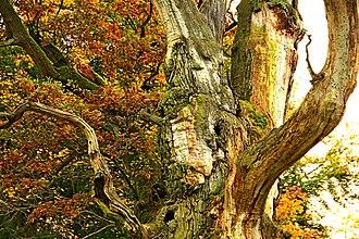 Wie viel kosten alte Bäume?