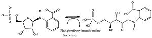 Isomerase - reaction catalyzed by phosphoribosylanthranilate isomerase