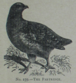 Picture Natural History - No 159 - The Partridge.png