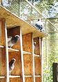 Pigeons in zoo.jpg