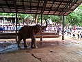 Pinnawala Elephant Orphanage 2012 - panoramio (2).jpg