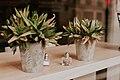 Plants on wooden shelf (Unsplash).jpg