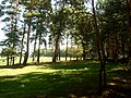 Plyasheva, Rivnens'ka oblast, Ukraine - panoramio (1).jpg