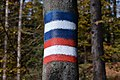 Poertschach Wörthersee-Rundwanderweg und Bannwaldweg Markierungen 01112014 448.jpg