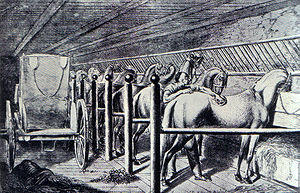 Equestrian facility - A set of restricted movement stalls in an 18th-century stable