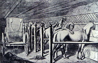 Horse care - A set of tie stalls in an 18th-century stable