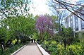 Pollinator Garden in April (16994670593).jpg
