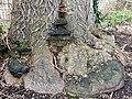 Polyporales - Fomes fomentarius - 6.jpg