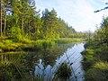 Pond - panoramio.jpg