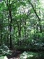 Pond Wood, Ellesborough - geograph.org.uk - 1556102.jpg