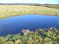 Pond by Hound House - geograph.org.uk - 656119.jpg