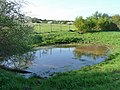 Pond by the footpath - geograph.org.uk - 2349631.jpg