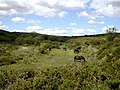 Ponies on Dartmoor - geograph.org.uk - 106352.jpg