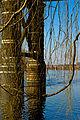 Pont de fer contre pont de pierre Par David POMMIER.jpg