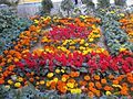 Pretty colourful flowers.jpg