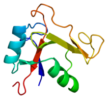 Protein TNFAIP6 PDB 1o7b.png