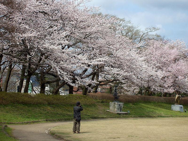 File:Prunus sp in Takaoka Kojo Park 02.jpg