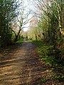 Public Byway near Cobblers Gardens - geograph.org.uk - 316566.jpg
